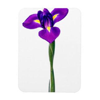 Irises den gula Irisblomman för lilor blom- Magnet