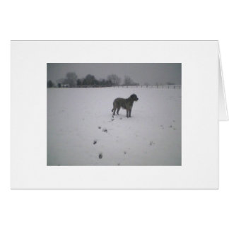 Irländsk wolfhound i snön OBS kort