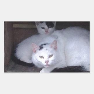 Irländska katter tar ShelterOn om den regniga Rektangulärt Klistermärke