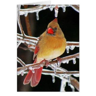 IsPrincess - kvinnlig huvudsaklig fågel Hälsningskort