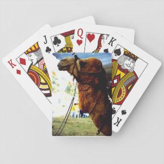Israelisk kamel som leker kort spelkort