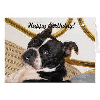 Jackies pic 2 003, grattis på födelsedagen! hälsningskort