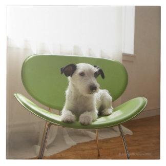 Jackrussell terrier. 2 kakelplatta