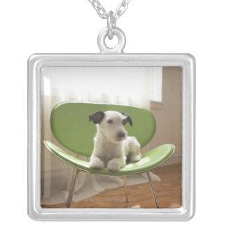 Jackrussell terrier. 2 silverpläterat halsband