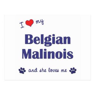 Jag älskar min belgiska Malinois (den kvinnliga Vykort