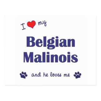 Jag älskar min belgiska Malinois (den Male hunden) Vykort