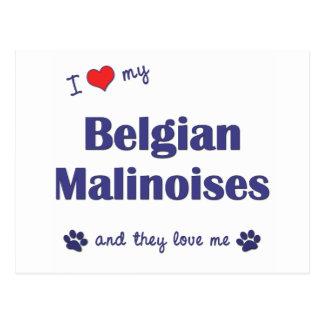 Jag älskar min belgiska Malinoises (åtskilliga Vykort
