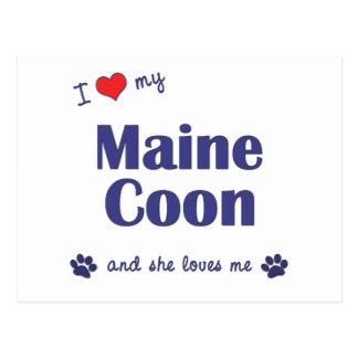 Jag älskar min Maine Coon (den kvinnliga katten) Vykort