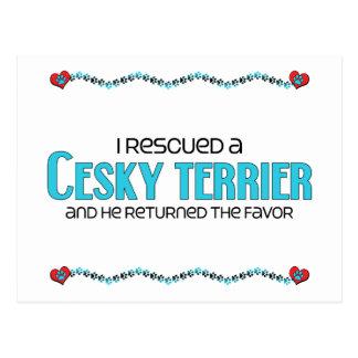 Jag räddade en Cesky Terrier (den Male hunden) Vykort