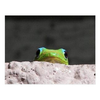 Jag ser dig geckoen vykort