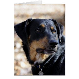 Jaga hund hälsningskort