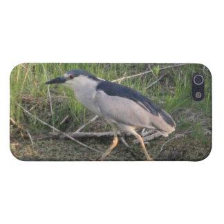 Jaga Svart-Krönad Natt-Heron 4/4s specifikation iPhone 5 Hud