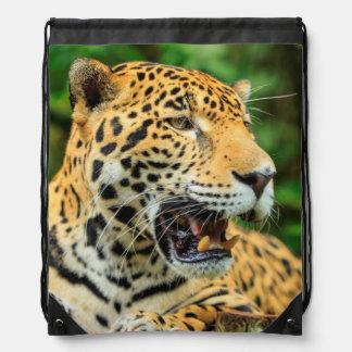 Jaguar visar dess tänder, Belize Gympapåse