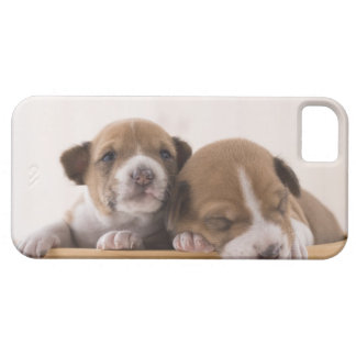 Japan iPhone 5 Cover