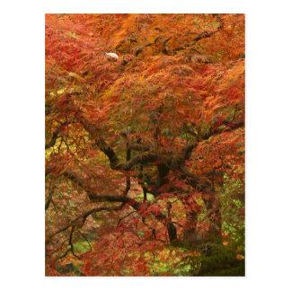 Japansk lönn i nedgångfärg 4 vykort