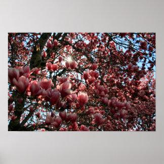 Japansk Magnolia Poster