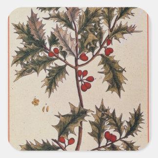 """Järnek från """"ett nyfiket växt-"""", 1782 fyrkantigt klistermärke"""