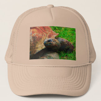 Jätte- Aldabra sköldpaddaGrunge, Kansas City Zoo Keps