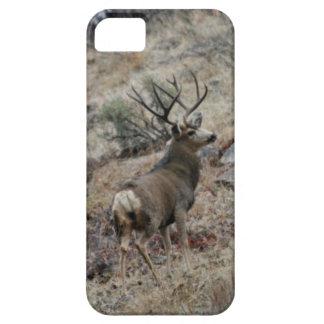 Jätte- bock för mulehjort iPhone 5 cases