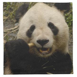 Jätte- familj för pandaAiluropodamelanoleuca): 5 Tygservett