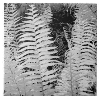 Jätte- läderfern för vild, Florida, USA Kakelplatta