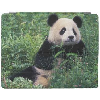 Jätte- panda i gräset, Wolong dal, Sichuan iPad Skydd
