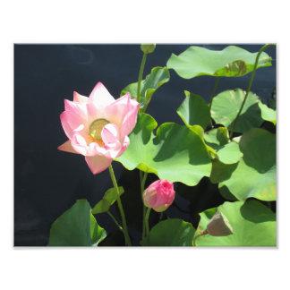 Jätte- tryck för lotusblommablommafoto
