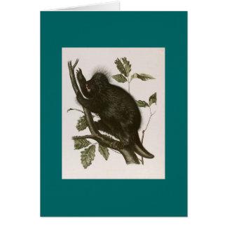 JJ Audubon - Kanada Porcupine Hälsningskort