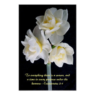 Jonquil blomma - Ecclesiastes 3:1 Poster