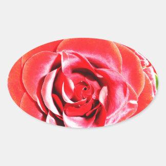 Jordanienröd ros 2 ovalt klistermärke