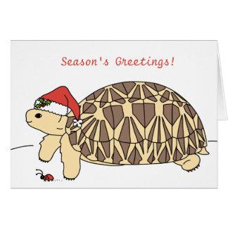 Julkort för anpassadestjärnasköldpadda hälsningskort