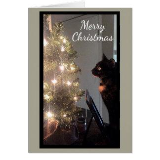 Julkort för katt för julglädjeCalico Hälsningskort