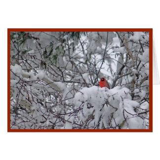 Julkort för snökardinal 6211-2 hälsningskort