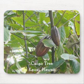 Kakaoträd, Kauai, Hawaii Musmatta