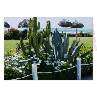 Kaktus i Mexico, Rosarito strand Hälsningskort