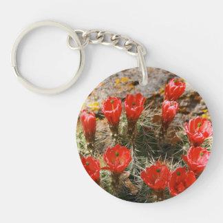 Kaktus med härliga röda blom