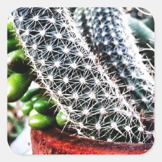 Kaktus (mini- växt) fyrkantigt klistermärke