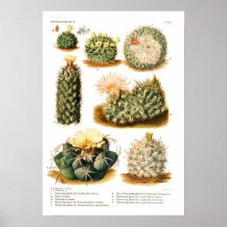Kaktusart Poster