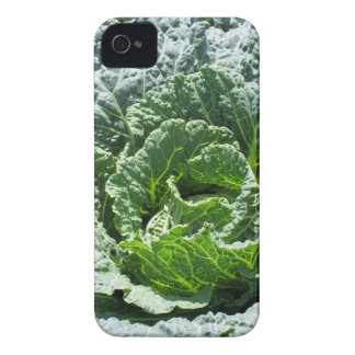 Kål Case-Mate iPhone 4 Fodral