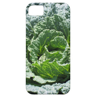 Kål iPhone 5 Hud