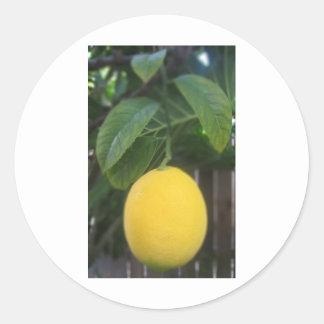 Kalifornien citron runt klistermärke