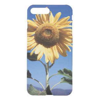 Kalifornien en kolossal solros (Helianthus) 3 iPhone 7 Plus Skal