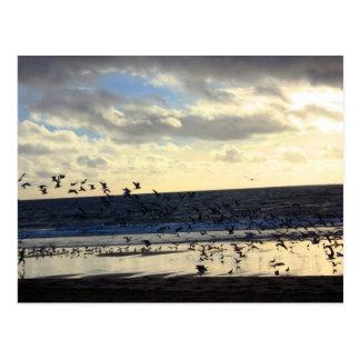 Kalifornien - Manhattan Beach. F Vykort