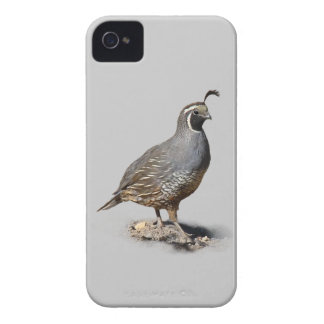 KALIFORNIEN QUAIL Case-Mate iPhone 4 FODRAL