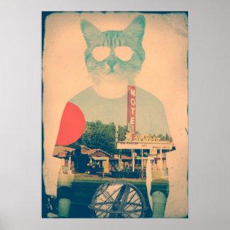 Kall katt poster