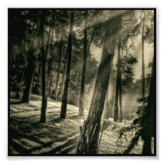 Kall svartvit skogsolskennatur