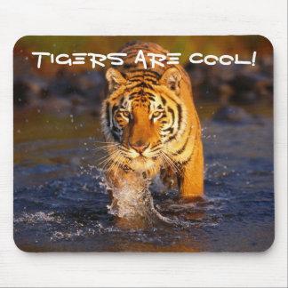 Kall tiger mus mattor