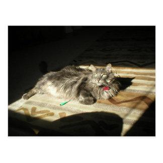 Kalla katter härskar vykort