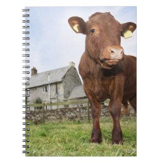 Kalvanseende i äng anteckningsbok