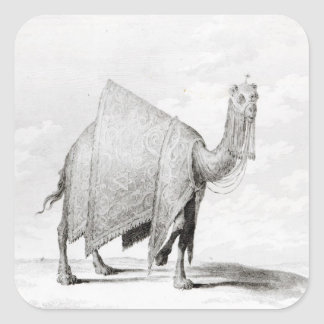 Kamel Fyrkantigt Klistermärke